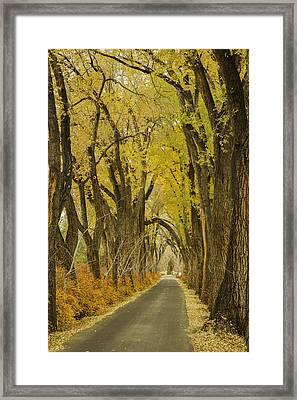 Los Poblanos Ranch Drive-001 Framed Print