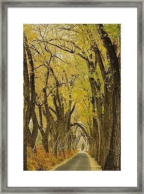 Los Poblanos Ranch Drive-002 Framed Print