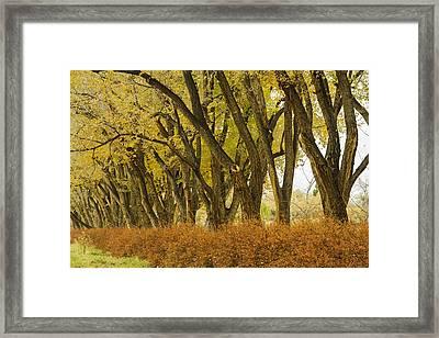 Los Poblanos Ranch Drive-003 Framed Print