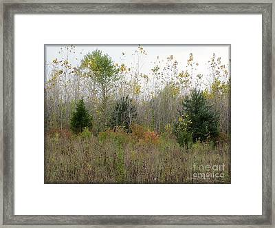 Loss Framed Print by Kathie Chicoine