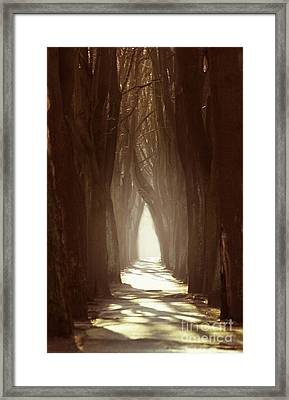 Lost Alley  Framed Print