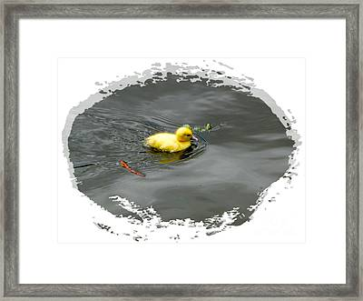 Lost Chicklet Framed Print by Al Bourassa
