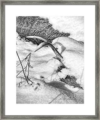 Lost Deer Framed Print by Keith Hutchings