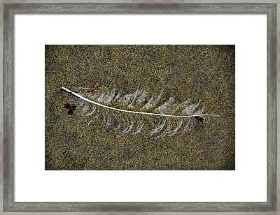 Lost Feather Framed Print by Helen Worley