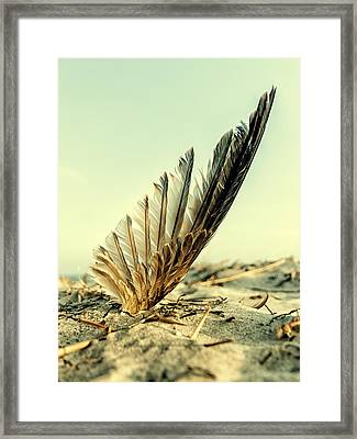 Lost Feather At The Beach Framed Print