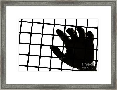 Lost Freedom Framed Print by Olivier Le Queinec