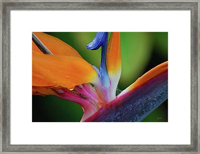 Framed Print featuring the photograph Lost In Paradise by Jani Freimann