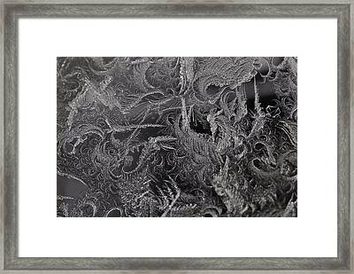 Lost In The Frost Framed Print by Susan Capuano