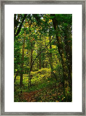 Lost In The Green Framed Print by Jeff Swan