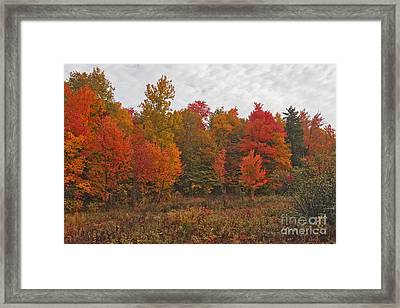 Lost In The Refuge Framed Print