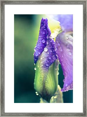 Lost In These Moments Framed Print by Shane Holsclaw