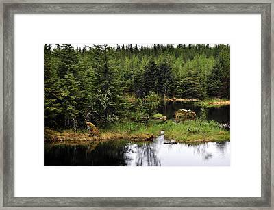 Lost In Wild Paradise 2 Framed Print by Davina Washington