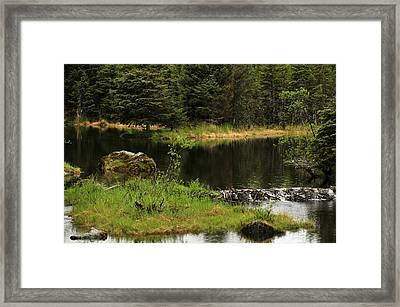 Lost In Wild Paradise Framed Print by Davina Washington