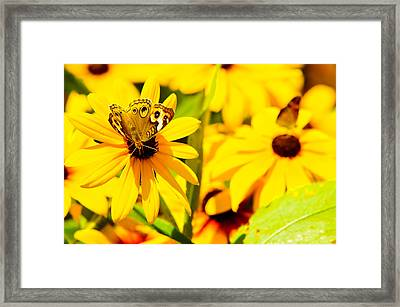 Lost In Yellow Framed Print by Kevin Read