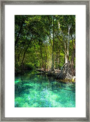 Lost Lagoon On The Yucatan Coast Framed Print by Mark E Tisdale