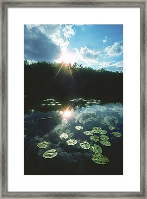 Lost Lake Lilies Framed Print