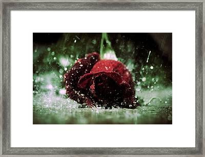 Lost Love Framed Print