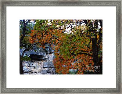 Fall Foliage At Lost Maples State Natural Area  Framed Print