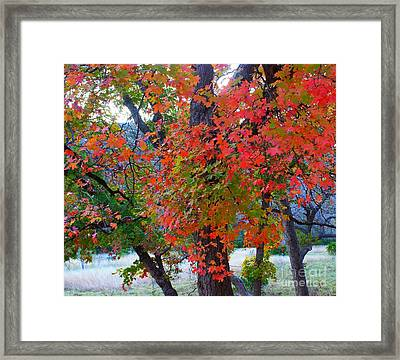 Lost Maples Fall Foliage Framed Print