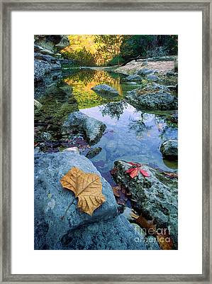 Lost Maples Reflection Framed Print by Inge Johnsson