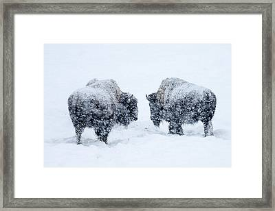 Lost Without You... Framed Print by David Yack