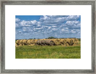 Lots Of Feed Framed Print