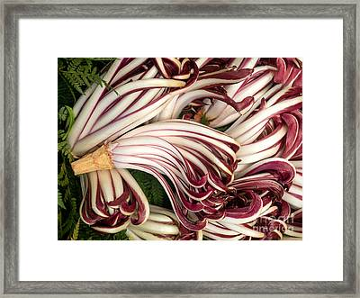 Lots Of Radicchio Heads  Framed Print by Frank Bach