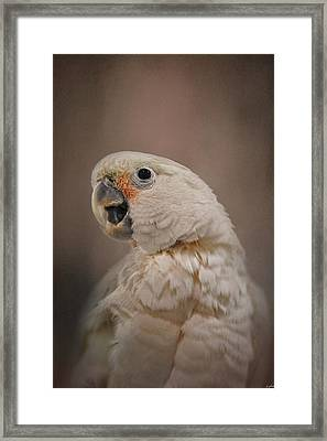 Lots To Say Framed Print by Jai Johnson