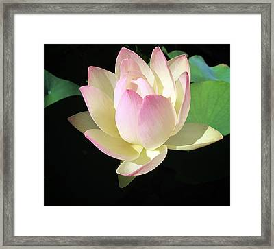 Lotus 9 Framed Print