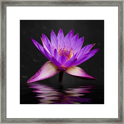 Lotus Framed Print by Adam Romanowicz