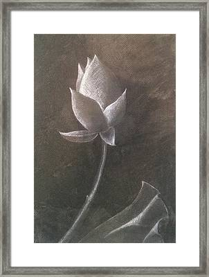 Lotus  Framed Print by Amy Jago-Ford