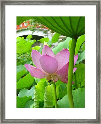 Framed Print featuring the photograph Lotus And Bridge by Larry Knipfing