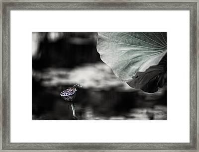 Lotus And Dragonfly 2 Framed Print