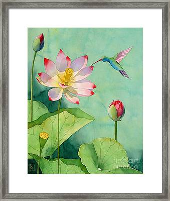 Lotus And Hummingbird Framed Print by Robert Hooper