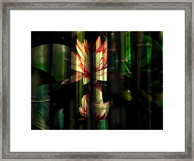 Lotus Bamboo  Framed Print