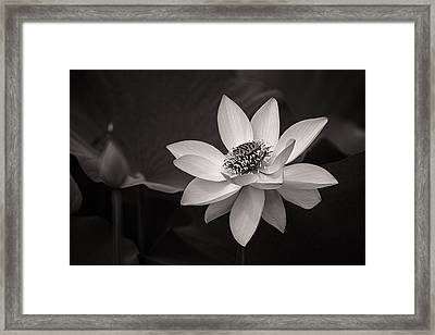 Lotus Black And White Art Series Framed Print