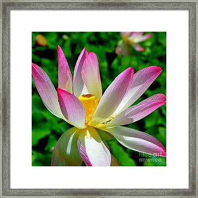 Lotus Blossom Framed Print by Mary Deal