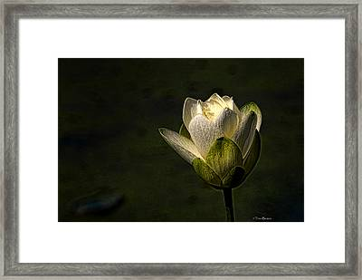 Framed Print featuring the photograph Lotus Blossom by Travis Burgess