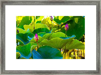 Lotus Garden Framed Print