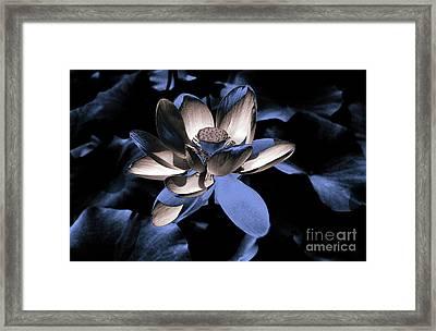 Lotus By Night Framed Print