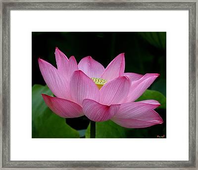Lotus-center Of Being IIi Dl033 Framed Print