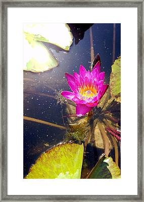 Lotus Day Framed Print