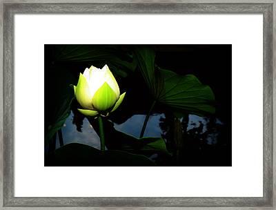 Lotus Flower 2 Framed Print by Kara  Stewart