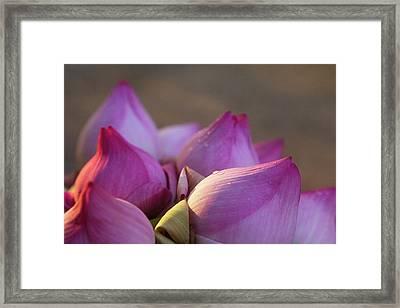 Lotus Flower Bud, Thailand Framed Print