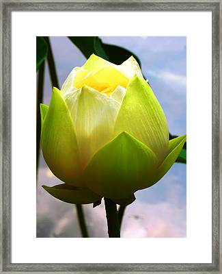 Lotus Flower Framed Print by Kara  Stewart