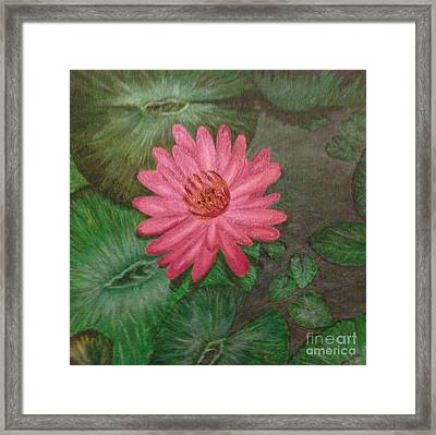 Water Lilly Framed Print by S P
