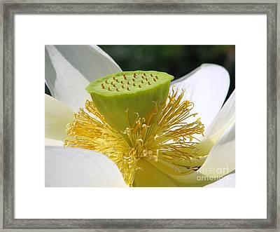 Lotus Flower With Pod Framed Print by Eva Kaufman