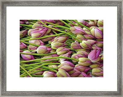 Lotus Flowers At Market Framed Print by Lightmaster