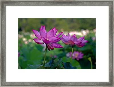 Framed Print featuring the photograph Lotus Flowers by Jerry Gammon