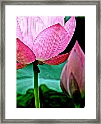 Lotus Heaven - 128 Framed Print by Larry Knipfing
